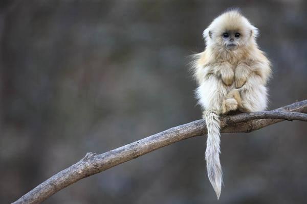 """Foto concorrente da categoria """"The Gerald Durrell Award for the Endangered Wildlife"""" em 2011 (Foto: Cyril Ruoso)"""